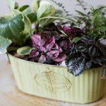 Flower Shop West Kelowna | Passionate Blooms Floral Design | Planted Garden