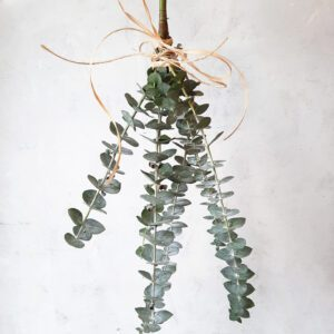 eucalyptus shower bundle
